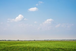 Background photography of bright lush grass field under blue sunny sky. Outdoor countryside meadow nature of countryside village in Russia. Rural pasture landscape with plain green grass.