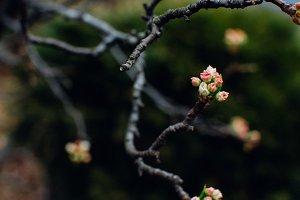 moody spring blossom