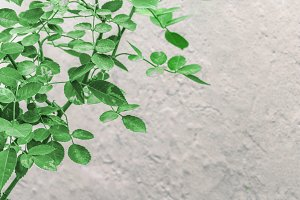 Plants over Wall Background