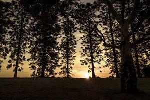 Dark Trees Sunset