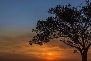 Australian Tree and Sunset