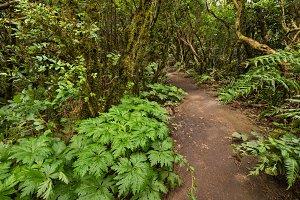 Anaga rain forest in Tenerife island