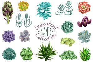 Big Succulent Collection
