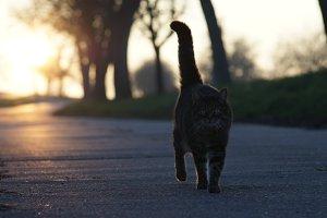 catwalk 2