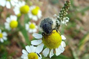 Furry Bug