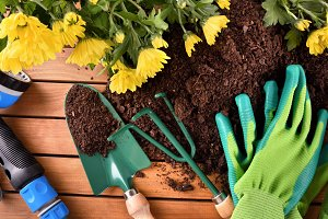 Tools plants and flowers on wood