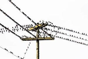 Birds on phone wires