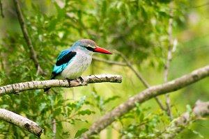 Bird on a Branch - Africa 1
