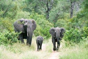 Elephant Family - Africa 4