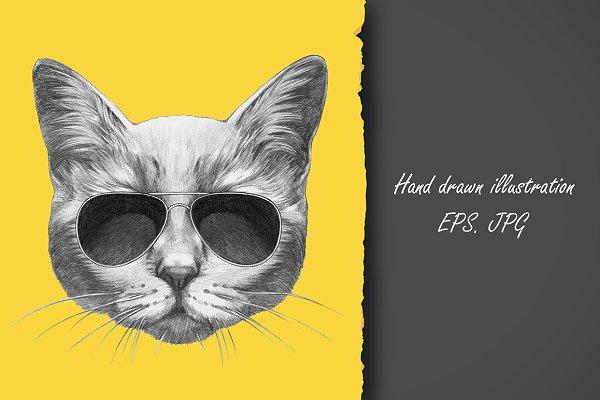 Cat / Summertime