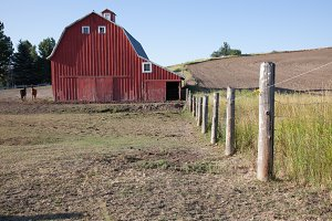 Red Barn with Horses - Barns 5