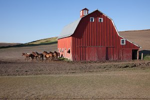 Red Barn with Horses - Barns 3