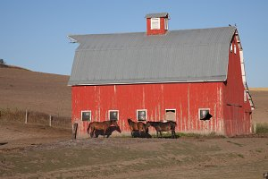 Red Barn with Horses - Barns 1