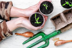 Hands with spring plants