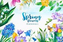 Spring flowers. Watercolor.