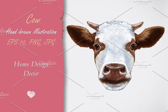 Cow / Decor