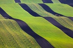 Wavy green fields in South Moravia
