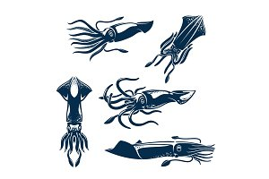 Squid sea animal icon set for seafood design
