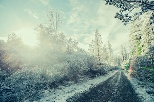 Snowy Road with Sunshine