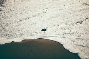 Pelican Bird Ocean Foam