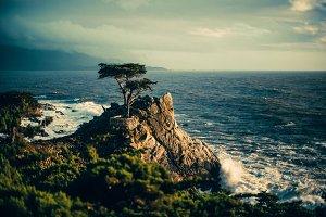 Lone Cypress Tree California Ocean