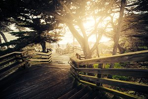 Path to the Ocean with Sun Flare