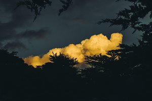 Dramatic Cloud Through the Trees
