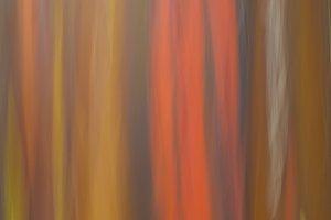 Rainbow Eucalyptus - Flowers 68