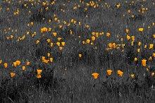 Flowers 41