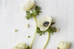 White flowers on white background