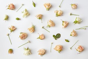 Assorted roses heads.