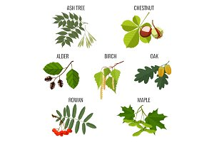 Ash, chestnut, alder, birch, maple, oak with acorns, rowan berries