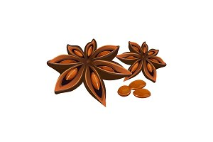 Anise star isolated on white. Stars shaped fruit of Illicium verum