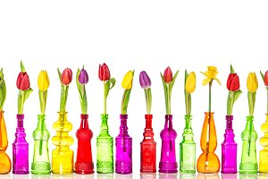 Tulips and daffodil flowers