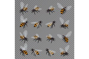Honey bee vector set on a transparent background.
