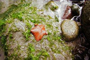 Little Orange Starfish on the beach