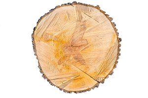 Slice the pear tree trunk