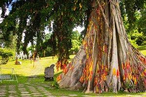 Tree with ribbons in eco national park Yang Bay in Hna Trang, Vietnam