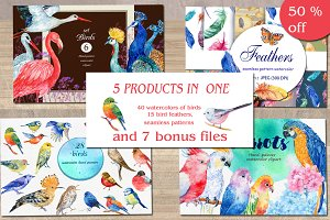 birds bundle / watercolor/ 50% sale