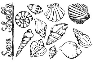 Sea shell monochrome line art vector