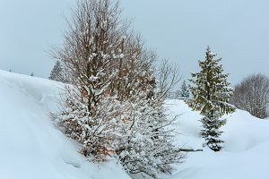 Winter Carpathians landscape.