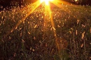 Suncatchers - Golden Star Sun Flare