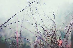 iseeyouphoto winter plants
