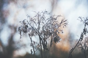 iseeyouphoto winter plants 4