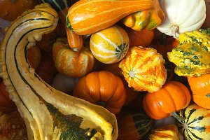 Harvest Gourds and Squash