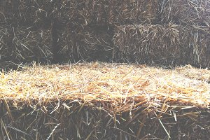 Faded Bale of Hay