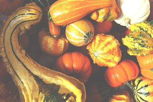 Harvest Gourds and Squash Fade