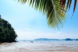 coconut leaf on the beach