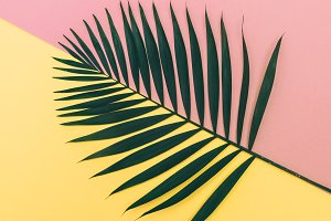 leaf on pink and yellow