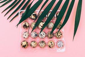 plastic packaging quail eggs